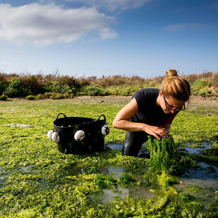 Fotografía que muestra el proceso de recogida manual de las algas en los esteros gaditanos. Fotografía para Suralga