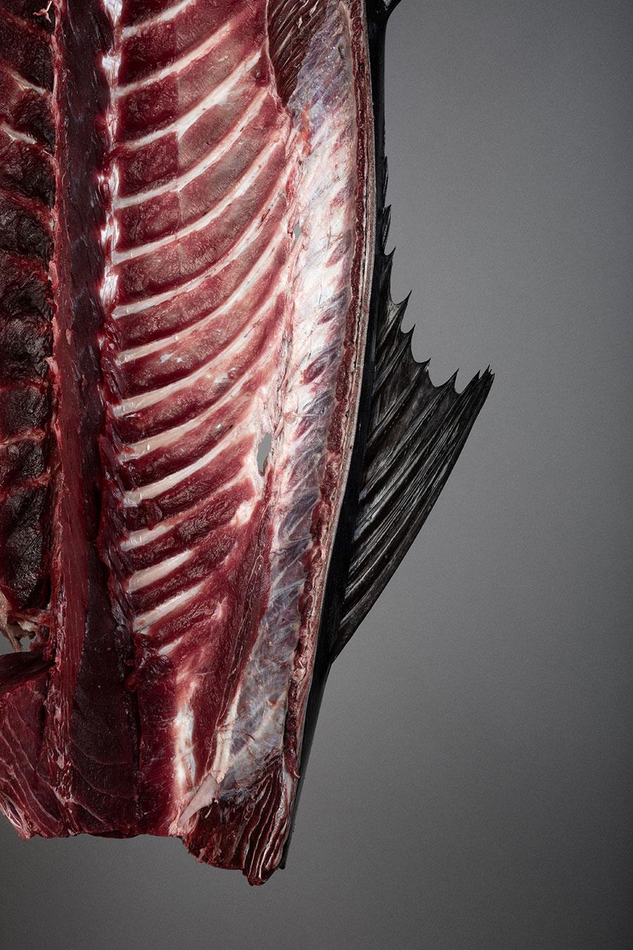 Fotografia gastronómica atún gadira