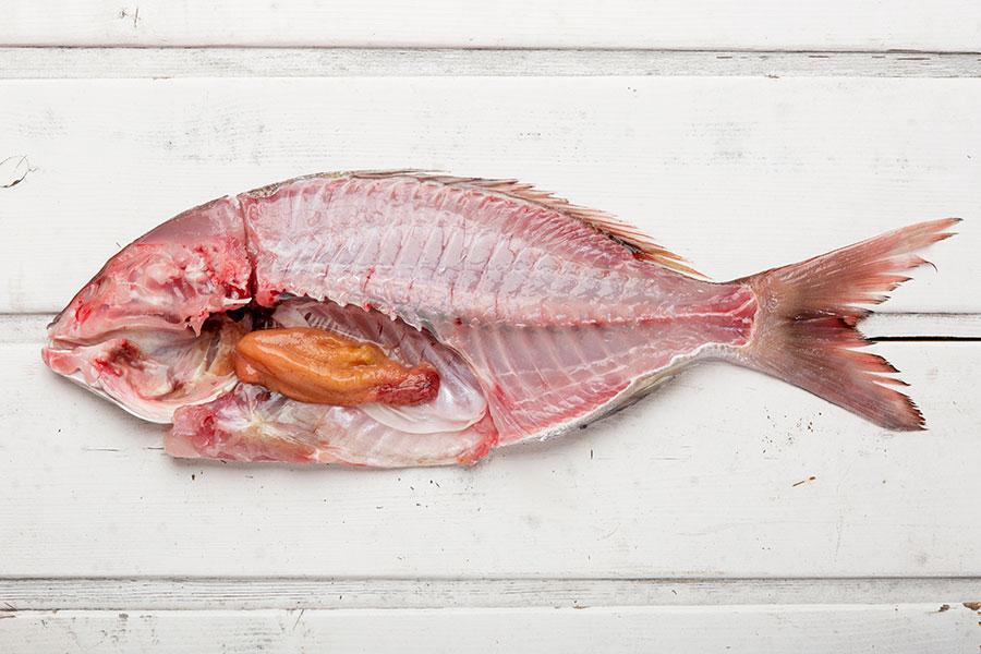Foto pescado el alférez